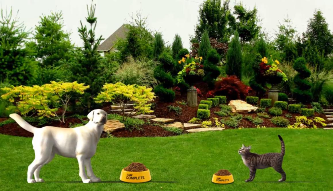 Cat Dog Vitalcan AR